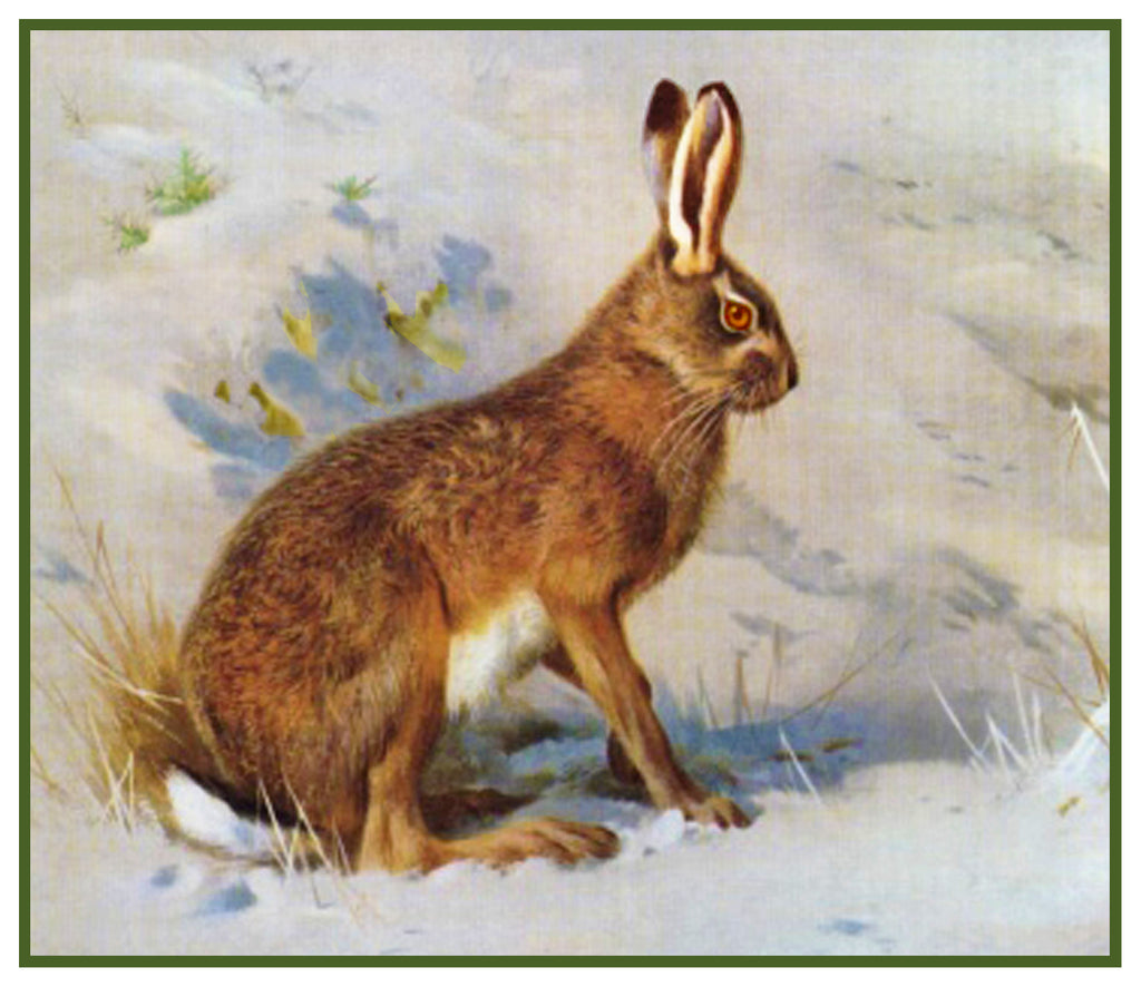 Common Hare Rabbit by Naturalist Archibald Thorburn's Animal Counted Cross Stitch Pattern