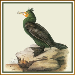 Double Breasted Cormorant Bird Illustration by John James Audubon Counted Cross Stitch or Counted Needlepoint Pattern