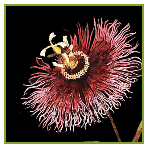 Passion Flower detail square by Mary Delany Counted Cross Stitch or Counted Needlepoint Pattern
