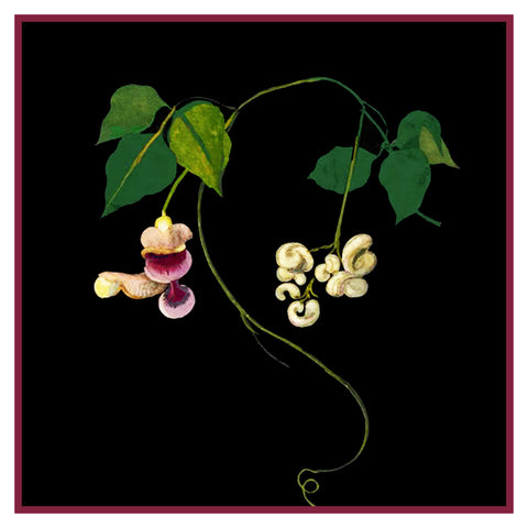 Corkscrew Vine Flower by Mary Delany Counted Cross Stitch or Counted Needlepoint Pattern