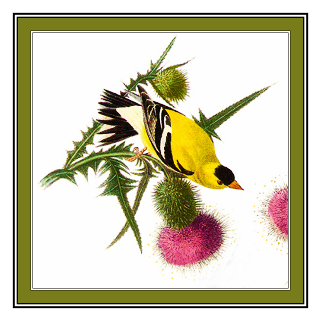 John James Audubon's Bird Illustration of The American Goldfinch Counted Cross Stitch or Counted Needlepoint Chart
