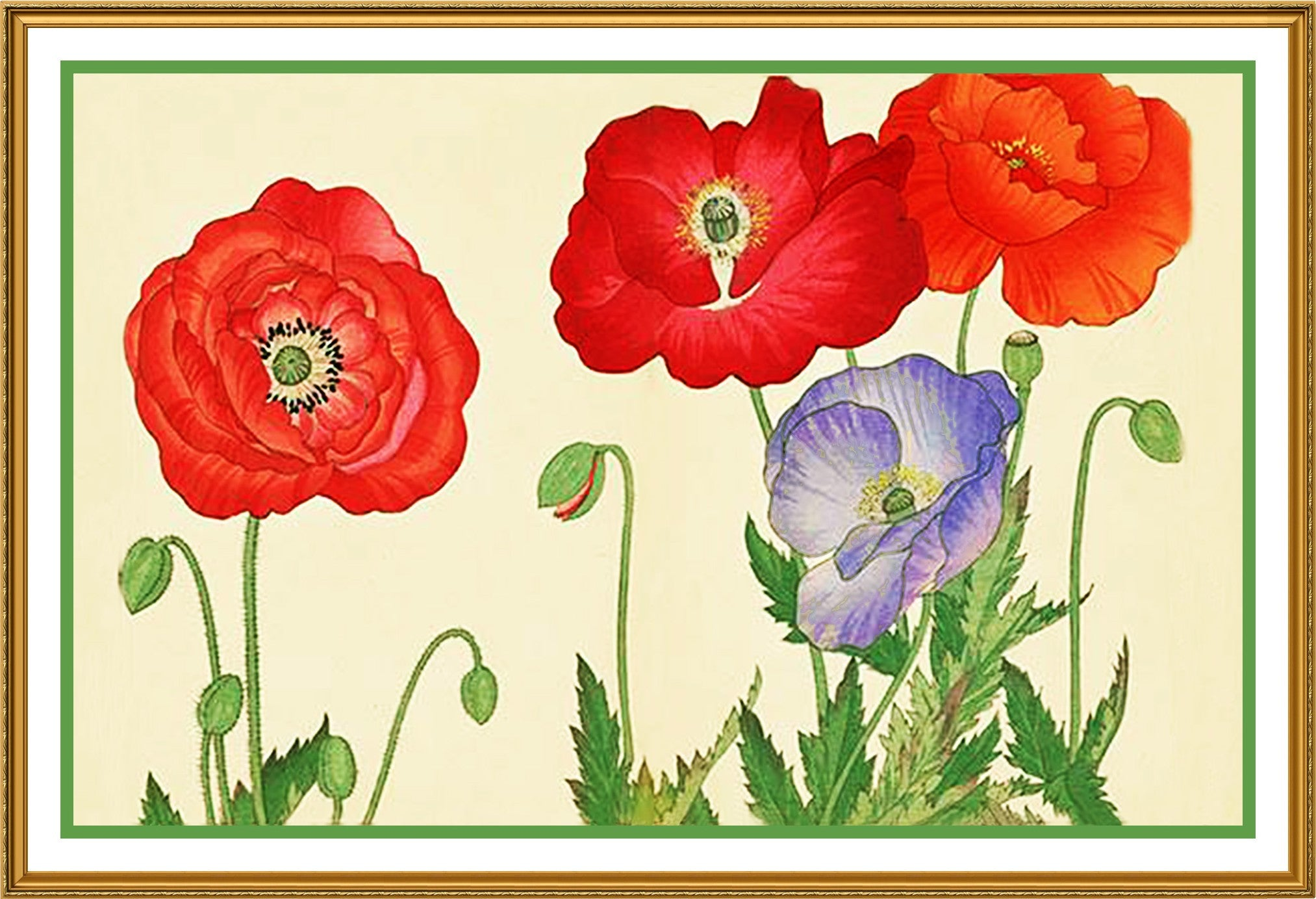 Tanigami konan asian poppy flowers counted cross stitch or counted tanigami konan asian poppy flowers counted cross stitch or counted needlepoint pattern mightylinksfo