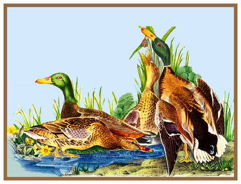 Mallard Ducks Bird Illustration by John James Audubon Counted Cross Stitch or Counted Needlepoint Pattern
