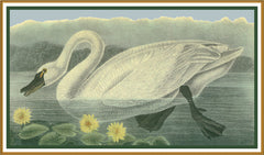 A Tundra Swan Bird Illustration by John James Audubon Counted Cross Stitch or Counted Needlepoint Pattern - Orenco Originals LLC