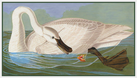 Trumpeter Swan Bird Illustration by John James Audubon Counted Cross Stitch Pattern