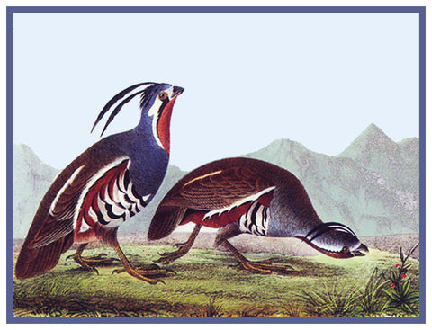 Pair of Mountain Quail Bird Illustration by John James Audubon Counted Cross Stitch or Counted Needlepoint Pattern