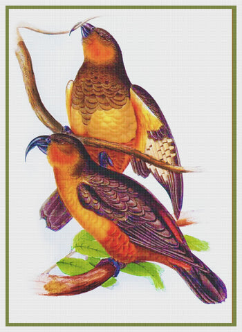 Norfolk Kaka by Naturalist John Gould of Birds Counted Cross Stitch Pattern