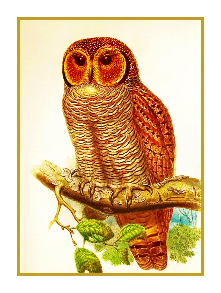 Mottled Wood Owl by Naturalist John Gould of Birds Counted Cross Stitch or Counted Needlepoint Pattern