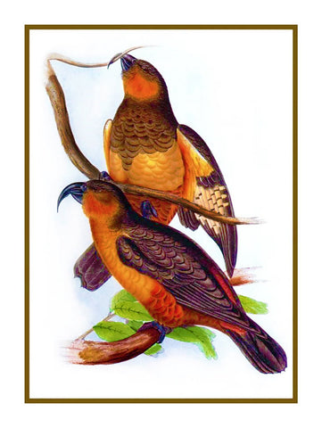 Norfolk Kaka by Naturalist John Gould of Birds Counted Cross Stitch Pattern DIGITAL DOWNLOAD