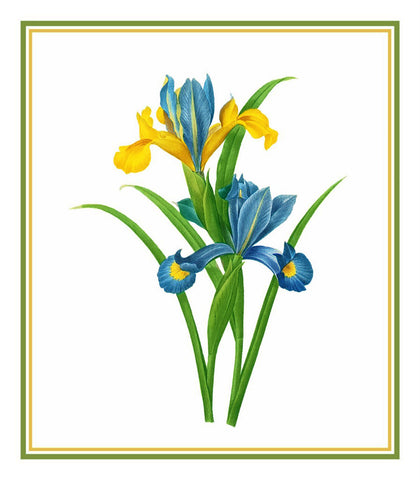 Spanish Iris Flower Inspired by Pierre-Joseph Redoute Counted Cross Stitch Pattern