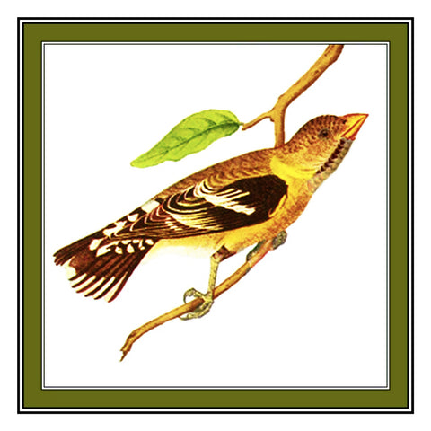 Golden Grosbeak Bird Illustration by John James Audubon Counted Cross Stitch Pattern