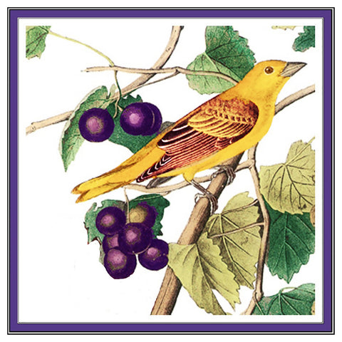 Golden Tanager and Grapes Bird Illustration by John James Audubon Counted Cross Stitch or Counted Needlepoint Pattern