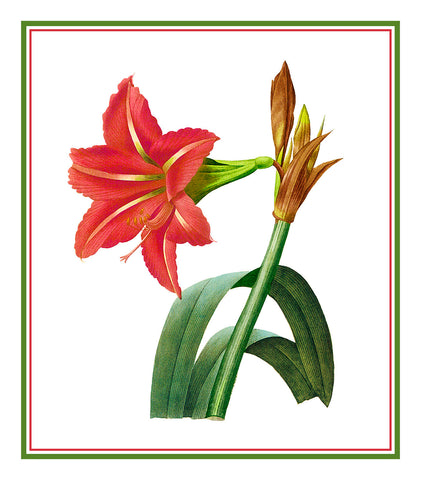 Amaryllis Flowers Inspired by Pierre-Joseph Redoute Counted Cross Stitch or Counted Needlepoint Pattern