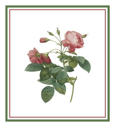 Rosa Gallica Flower Pierre-Joseph Redoute Counted Cross Stitch or Counted Needlepoint Pattern