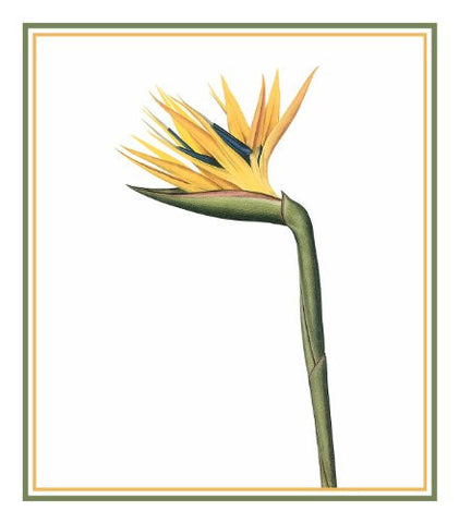 Bird of Paradise Flower Inspired by Pierre-Joseph Redoute Counted Cross Stitch Pattern