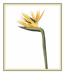 Bird of Paradise Flower Inspired by Pierre-Joseph Redoute Counted Cross Stitch  Pattern - Orenco Originals LLC