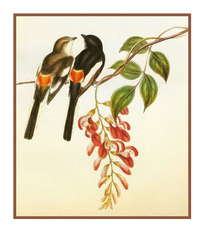 White Bellied Minivet by Naturalist John Gould Birds Counted Cross Stitch Pattern