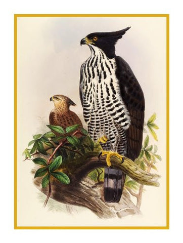 Blythes Hawk Eagle by Naturalist John Gould of Birds Counted Cross Stitch Pattern