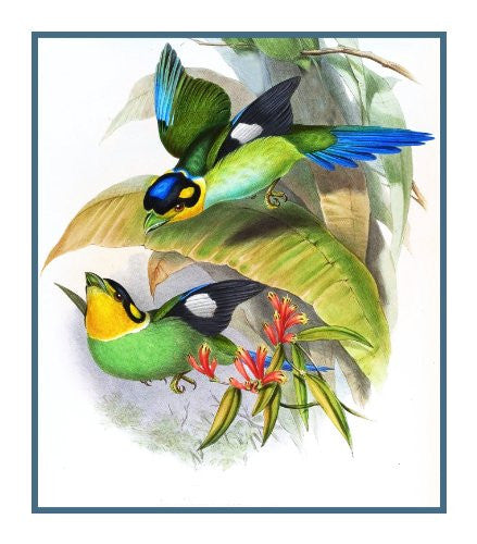 Long Tailed Broadbill by Naturalist John Gould of Bird Counted Cross Stitch or Counted Needlepoint Pattern