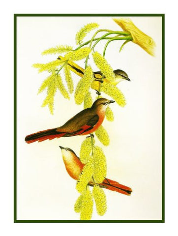 Rosy Minivet by Naturalist John Gould of Birds Counted Cross Stitch or Counted Needlepoint Pattern