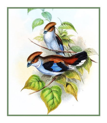 Silver Breasted Broadbill by Naturalist John Gould Birds Counted Cross Stitch Pattern