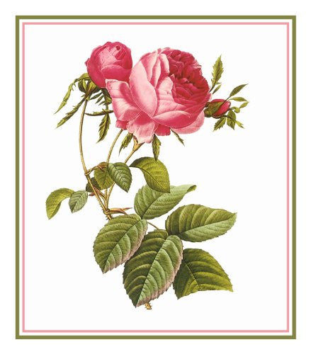 Pink Rose Flower Inspired by Pierre-Joseph Redoute Counted Cross Stitch or Counted Needlepoint Pattern
