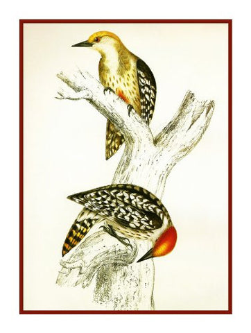 Yellow Woodpeckers by Naturalist John Gould of Birds Counted Cross Stitch Pattern