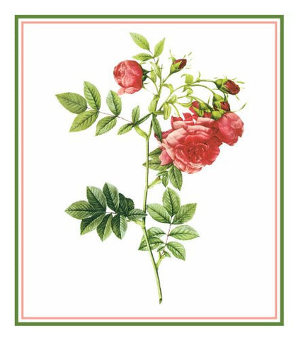 The Turnip Rose Flower Inspired by Pierre-Joseph Redoute Counted Cross Stitch Pattern