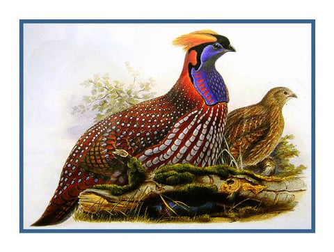 Temmicks Pheasant by Naturalist John Gould Birds Counted Cross Stitch Pattern