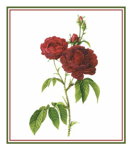 Bishops Rose Flower Inspired by Pierre-Joseph Redoute Counted Cross Stitch Pattern