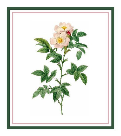 Anjou Rose Flower Inspired by Pierre-Joseph Redoute Counted Cross Stitch Pattern