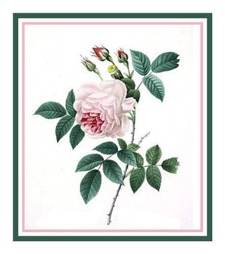 China Blush Rose Flower Inspired by Pierre-Joseph Redoute Counted Cross Stitch or Counted Needlepoint Pattern - Orenco Originals LLC