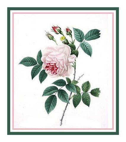 China Blush Rose Flower Inspired by Pierre-Joseph Redoute Counted Cross Stitch Pattern