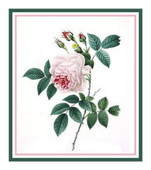 China Blush Rose Flower Inspired by Pierre-Joseph Redoute Counted Cross Stitch  Pattern - Orenco Originals LLC