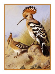 Crested Hoopoes By Naturalist Archibald Thorburn's Birds Counted Cross Stitch  Pattern - Orenco Originals LLC