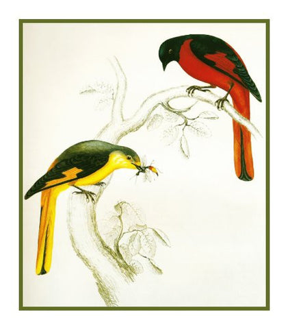 Short Billed Minivet by Naturalist John Gould Birds Counted Cross Stitch Pattern