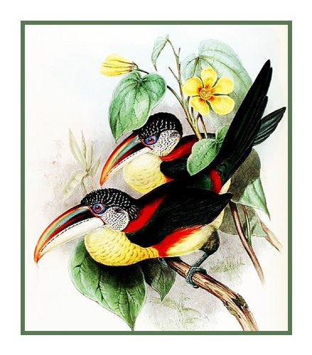 Collared Toucans by Naturalist John Gould of Bird Counted Cross Stitch or Counted Needlepoint Pattern