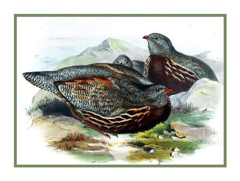 Snow Partridge by Naturalist John Gould Birds Counted Cross Stitch Pattern
