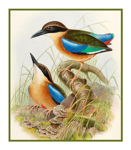 Blue Winged Pitta by Naturalist John Gould of Bird Counted Cross Stitch or Counted Needlepoint Pattern
