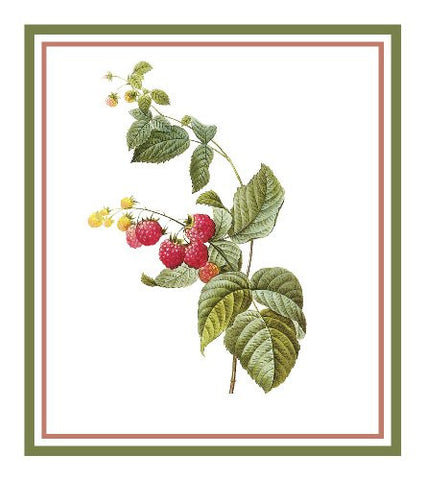 Raspberries Botanical Inspired by Pierre-Joseph Redoute Counted Cross Stitch Pattern