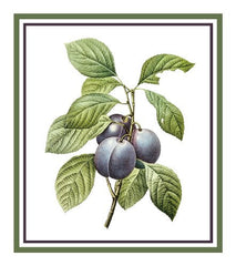 Plums Botanical inspired by Pierre-Joseph Redoute Counted Cross Stitch or Counted Needlepoint Pattern