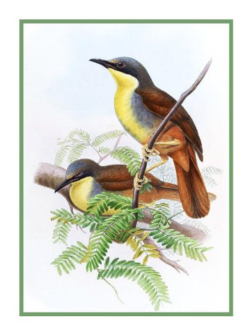 Laughing Thrush by Naturalist John Gould of Birds Counted Cross Stitch Pattern
