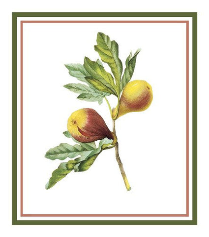 Figs Botanical Inspired by Pierre-Joseph Redoute Counted Cross Stitch or Counted Needlepoint Pattern