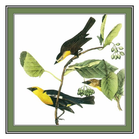 John James Audubon's Bird Illustration of The Yellow Headed Blackbird Counted Cross Stitch Chart