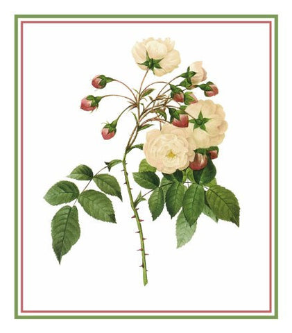 Adelaide Rose Flower Inspired by Pierre-Joseph Redoute Counted Cross Stitch Pattern