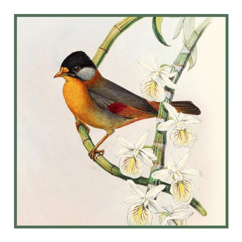 Silver Eared Leiothrix by Naturalist John Gould of Bird Counted Cross Stitch Pattern