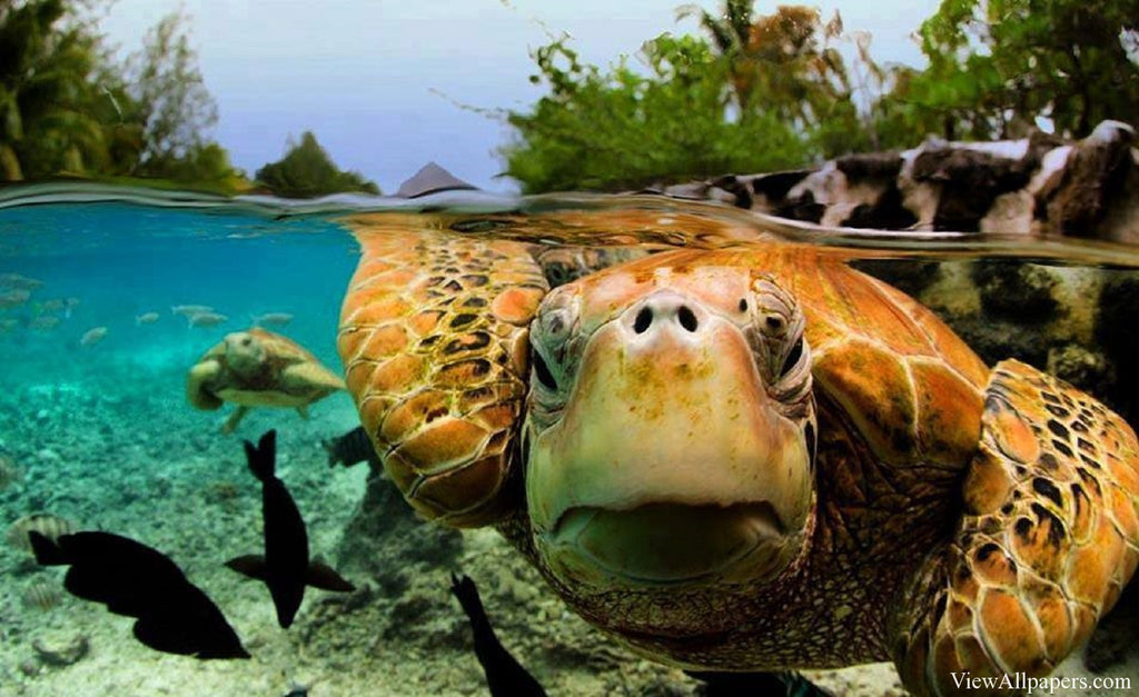 Some Very Interesting Facts you Should Know About Turtles