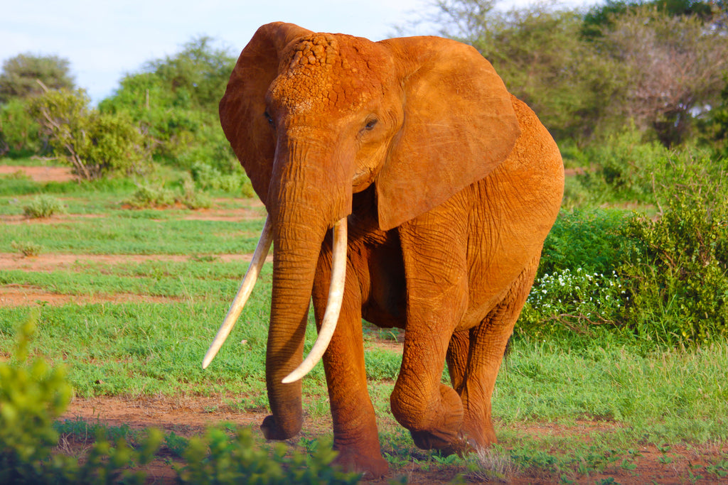 10 facts about elephant trunks that will surprise you!