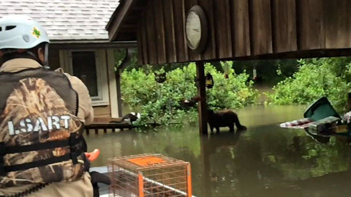 Faith in Humanity Restored: Louisiana Floods - People Save Helpless Animals From Drowning