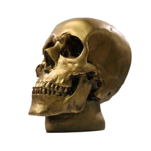Anatomical Skull Statue